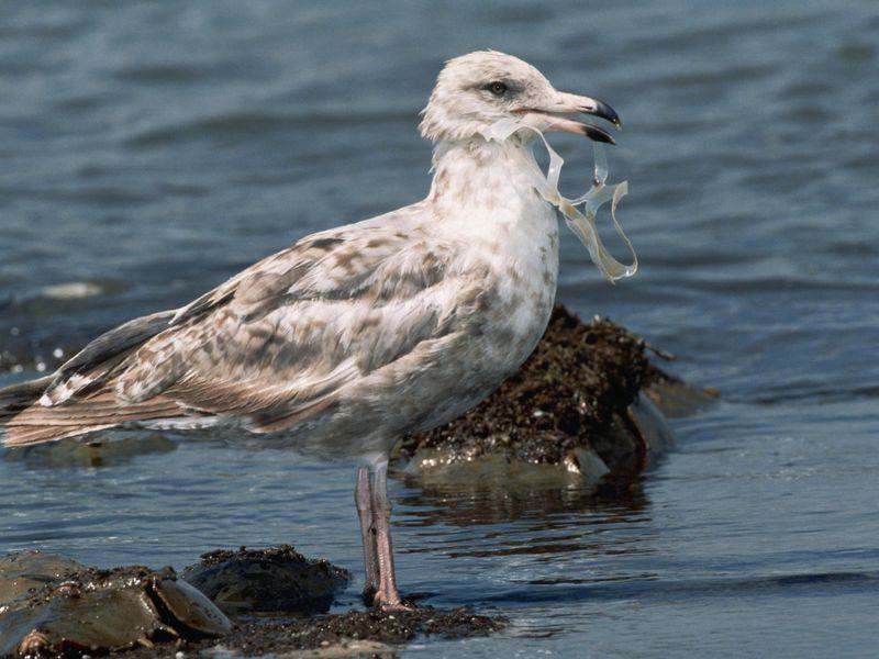 پلاستیک و پرندگان